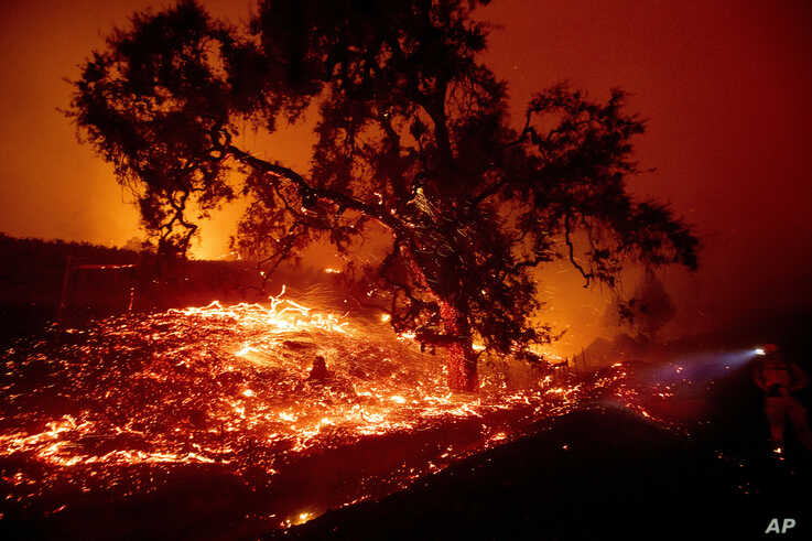 Embers fly from a tree as the Kincade Fire burns near Geyserville, Calif., on Thursday, Oct. 24, 2019. Portions of Northern…