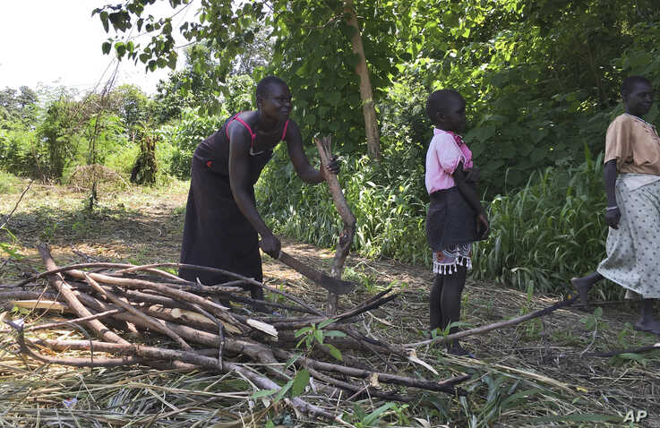FILE - In this Friday, July 14, 2017 file photo, a woman chops down trees for firewood with her daughter in the small town of…