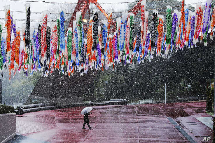 A man walks past hanging Koinobori (carp-shaped windsocks) during a snowfall in Tokyo, Sunday, March 29, 2020. Tokyo Gov…