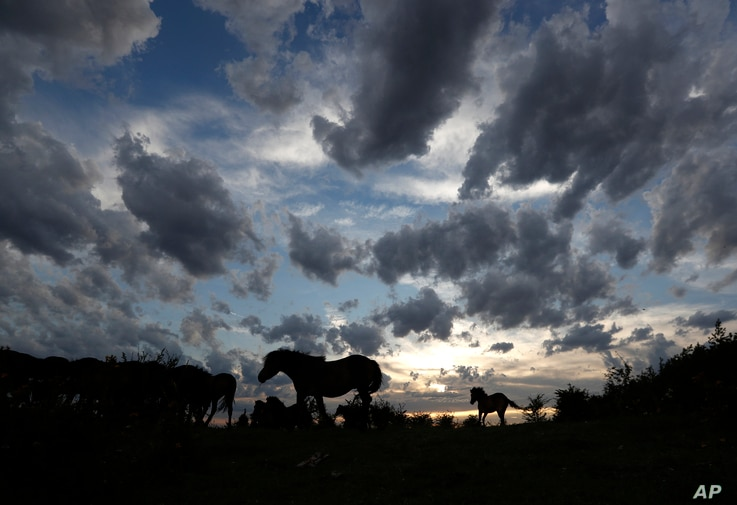 Wild horses are silhouetted against the sky at a wildlife sanctuary in Milovice, Czech Republic, Tuesday July 28, 2020.  Wild…
