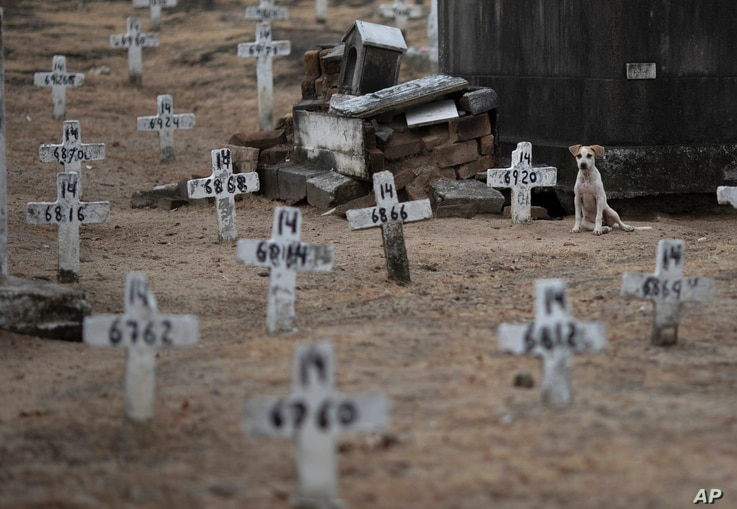 A dog sits next to numbered crosses at the Iraja cemetery, where many COVID-19 victims are buried in Rio de Janeiro, Brazil,…