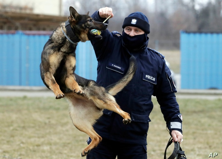 Police officer Pawel Kuchnio in training with patrol dog Orbita, in Warsaw, Poland, on Friday, March 19, 2021. When they age,…