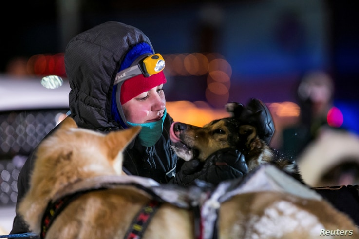 FILE PHOTO: A handler cares for dogs at the finish line during the Iditarod dog sled race in Nome
