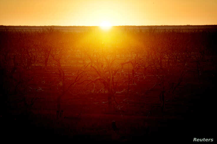The sun rises over dried up lake Pamamaroo, outside of Menindee, Australia, September 2, 2019. Prolonged drought exacerbated by…
