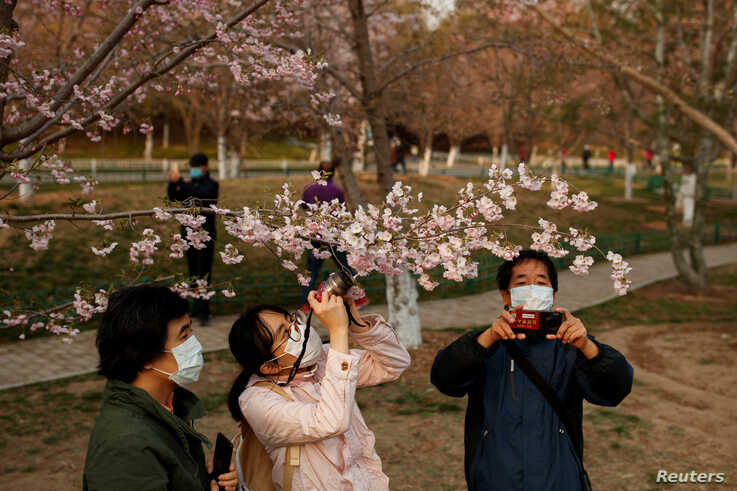 People wearing protective masks take pictures of cherry blossoms at a park, as the country is hit by an outbreak of the novel…