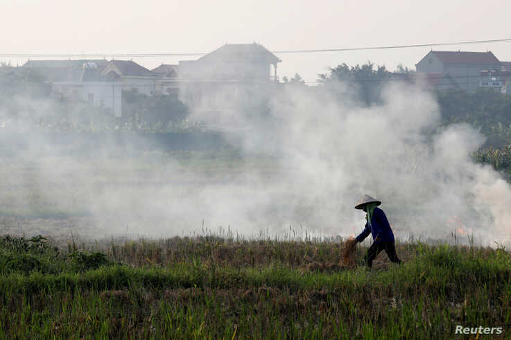 FILE PHOTO: A farmer harvests rice in a paddy field outside Hanoi, Vietnam June 10, 2019. REUTERS/Kham/File Photo