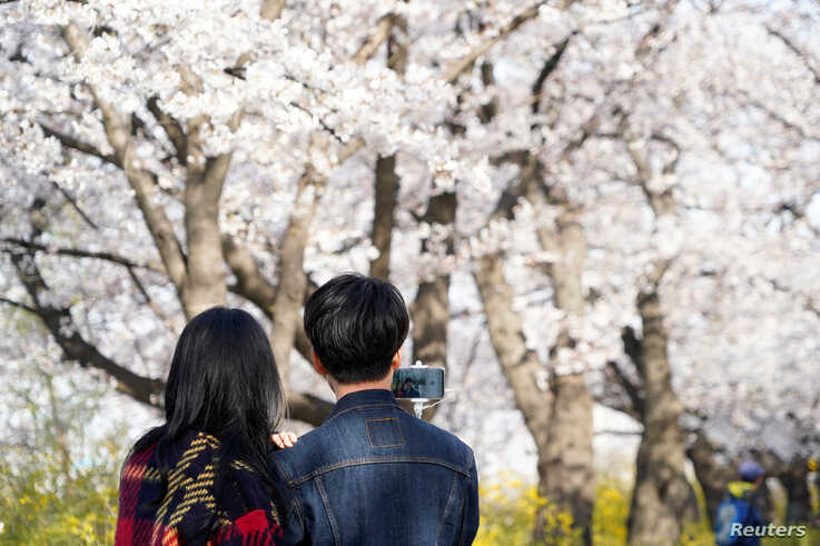 A couple takes a selfie near a cherry blossom trees street, closed to avoid the spread of the coronavirus disease (COVID-19),…