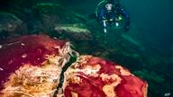 In this photo provided by the NOAA Thunder Bay National Marine Sanctuary a scuba diver observes the purple, white and green…