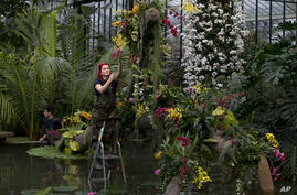 Ellie a horticulturist at Kew stands on a step ladder as she makes final adjustments during a media pre-view of an Orchid festival at Kew Botanical Gardens in London, Britian.