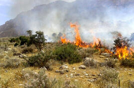 Fire is burning trees and weeds on mountain in west of Iran
