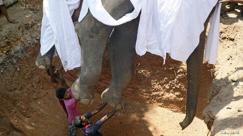 Local villagers prepare to bury the body of elephant Hemantha during a religious ceremony at a Buddhist temple in Colombo, Sri Lanka. Hemantha, 23, died from injuries to its feet, after undergoing medical treatment for six months.