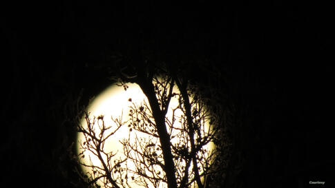 The first full moon of 2014 seen in Orange, California on Jan. 16, 2014 (Photo taken by Vu Ngoc Linh/VOA reader)