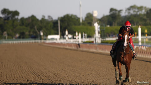 California Chrome, winner of the 2014 Kentucky Derby and Preakness Stakes, gallops during morning workouts at Belmont Park in Elmont, New York. The horse will attempt to become the first horse since Affirmed in 1978 to win racing's coveted triple crown...
