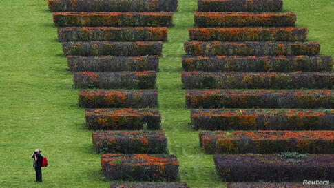 A person takes a picture as he walks through a public garden in Berlin, Germany.
