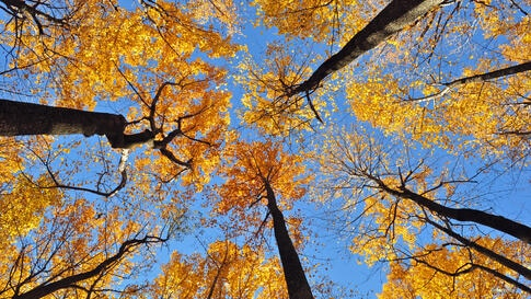 Fall colors on the trees at Shenandoah National Park in Virginia, USA (Photo by Dimitris Manis/VOA Greek Service)