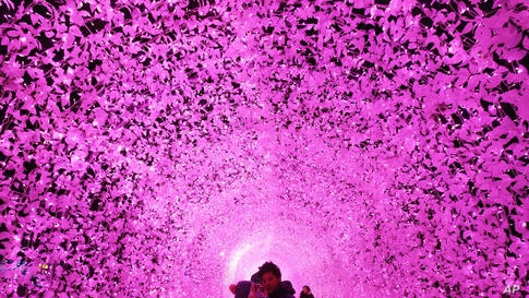 A couple poses under an illuminated tunnel to celebrate the upcoming Christmas and New Year holidays at Garden of Morning Calm in Gapyeong, South Korea. Christmas is one of the biggest holidays in South Korea.