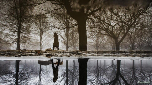 A woman is reflected in a puddle from rain and melted ice as she walks her dog during winter in Toronto, Canada, Jan. 11, 2014.