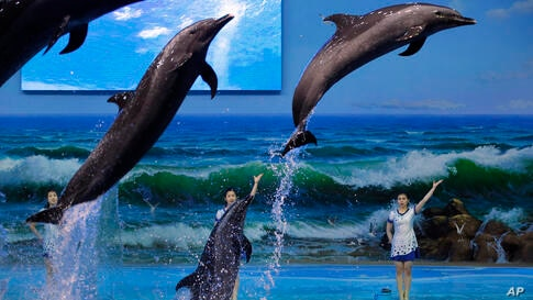 Trainers direct dolphins performing at a dolphinarium in Pyongyang, North Korea.