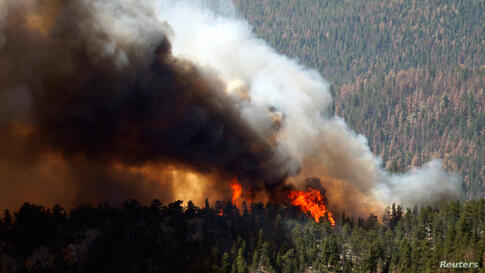 Fire rages through the forest in the High Park fire west of Fort Collins, Colorado June 19, 2012.