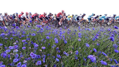 A pack of riders cycles during the 194 km sixth stage of the Tour de France cycling race from Arras to Reims.
