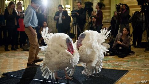 Two turkeys, Caramel and Popcorn are presented to the press in Washington, D.C. On Nov. 27, U.S. President Obama will announce the National Thanksgiving Turkey. Both turkeys will be pardoned, but the American people will decide which bird takes the tit...