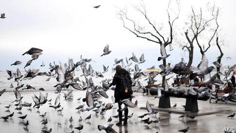 A Turkish woman feeds pigeons during a rainy day at Besiktas in Istanbul.