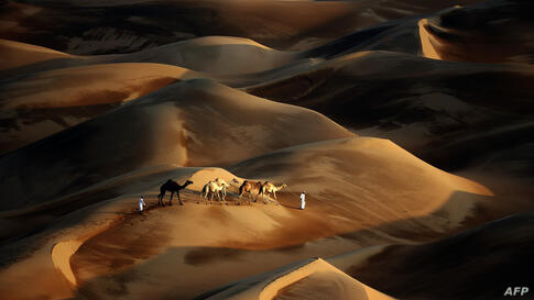 Tribesmen lead their camels through the sand dunes of the Liwa desert, 220 km west of Abu Dhabi, United Arab Emirates.