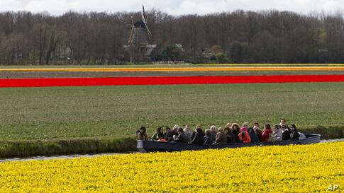 Tourists admire fields of blossoming daffodils and tulips from a barge as they pass near Lisse, western Netherlands.