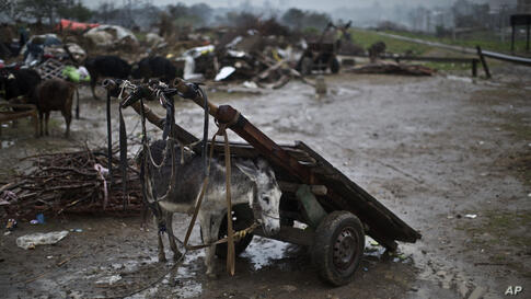 A donkey belonging to an Afghan refugee family whose mud house was destroyed by the Capital Development Authority for being built on illegal lands, shelters itself from rain under a wooden-cart in a slum on the outskirts of Islamabad, Pakistan.
