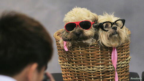 A photographer takes pictures of Lhasa Apso dogs in a basket, during a Dog and Cat Expo in Manila, Philippines.