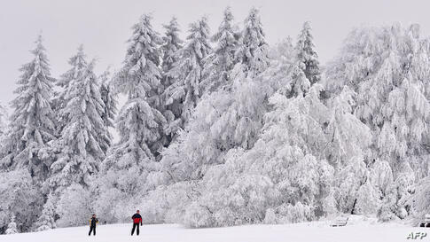 Two cross-country skiers make their way past snow-covered trees on the Rennsteig hiking trail near Masserberg, eastern Germany.