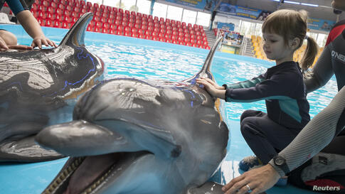A girl touches a dolphin during a dolphin therapy session at the Nemo Dolphinarium in Kyiv, Ukraine.