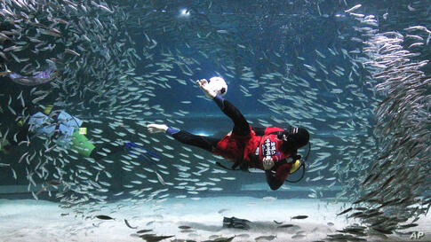 A diver wearing a South Korean soccer team uniform performs with sardines during an event to promote the upcoming 2014 Brazil World Cup, at the COEX Aquarium in Seoul, South Korea.