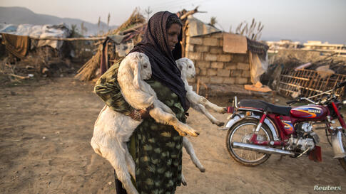 A woman whose family moved to Islamabad from Sargodha in Punjab Province to look for jobs carries goats near her makeshift shelter in Islamabad Pakistan.