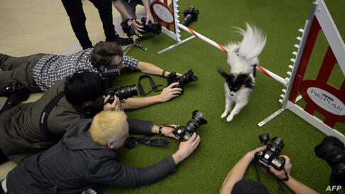 A Papillon jumps a hurdle during a press event at Madison Square Garden to promote the First-ever Masters Agility Championship at the 138th Annual Westminster Kennel Club Dog Show in New York.