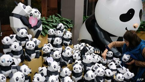 A woman picks a paper panda during a press conference at the Taipei City Zoao, Taiwan. One hundred paper pandas are on display as part of celebrations to mark the zoo's 100th anniversary which will fall on Oct. 31, 2014.