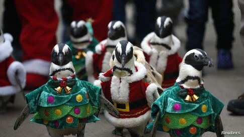Visitors look at penguins wearing Santa Claus (in red) and Christmas tree (in green) costumes during a promotional event for Christmas at an amusement park in Yongin, south of Seoul, South Korea.