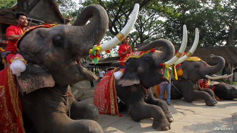 Mahouts pray while sitting on top of elephants during Thailand's National Elephant Day in the ancient Thai capital Ayutthaya.