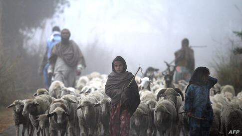 Young Indian Gujjar nomads walk with their flock through thick fog on the outskirts of Jammu, India.