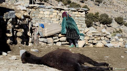 A woman mourns her dead donkey in Ait Sghir in the High Atlas region of Morocco.