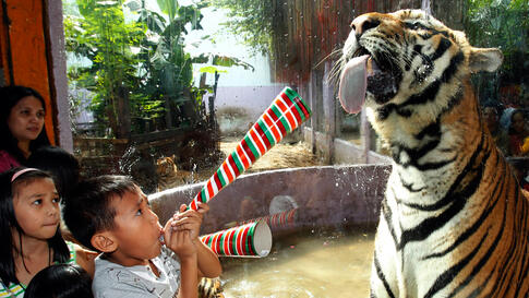 Dec. 28: A boy uses a paper horn to get the attention of a tiger at the Malabon zoo, north of Manila. The year 2010 is the year of the Golden Tiger, which ends on February 2, 2011 in the Chinese zodiac calendar.  (Romeo Ranoco/Reuters)