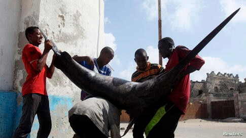 People help a fisherman to load a swordfish, caught from waters of the Indian Ocean, on his back as he makes his way to the market in Somalia's capital Mogadishu, Somalia.