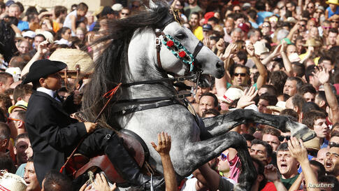 A rider rears up on his horse while surrounded by a cheering crowd during the traditional Fiesta of San Joan (Saint John) in downtown Ciutadella, on the Spanish Balearic Island of Menorca, June 23, 2014. The riders of the horses are representatives of ...