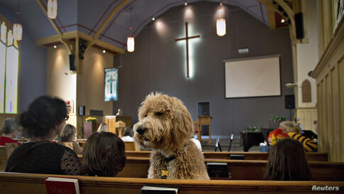 A dog named Luke sits in a pew at St. Andrew's United Church in North Vancouver, British Columbia, Canada, Oct. 6, 2013.