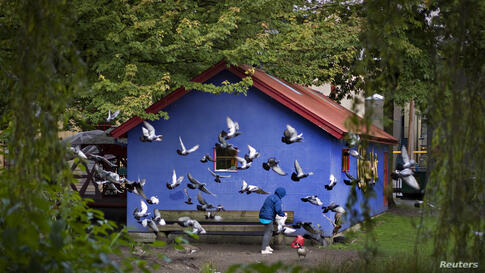 Pigeons gather around a woman who is preparing to feed them in a small park in Vancouver, British Columbia, Oct. 1, 2013.