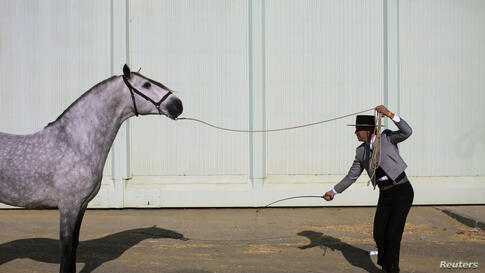 A horseman pulls a horse during the Sicab International Pre Horse Fair in the Andalusian capital of Seville, Spain.