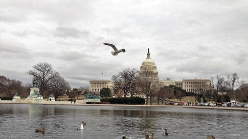 Seagulls mix with green-headed mallard and mottled brown wild ducks in the pond facing the Capitol building in Washington, D.C. (Diaa Bekheet/VOA)