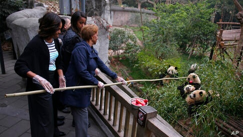 U.S. First Lady Michelle Obama, left, and her mother Marian Robinson, right, feed an apple to giant pandas during their visit at Giant Panda Research Base in Chengdu, Sichuan province, China.