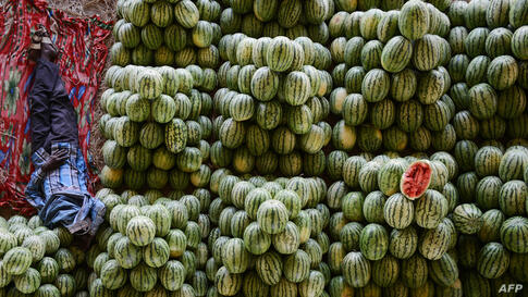 An Indian farmer rests among watermelons at his fruit stall prior to auctioning them at the Gaddiannaram wholesale fruit market on the outskirts of Hyderabad.