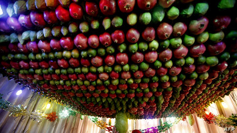 Samaritan man stands under a Sukkah made of fruits inside his house during the holiday of Sukkot (the Tabernacles Feast) celebrations on Mount Gerizim near the northern West Bank city of Nablus, Oct. 20, 2013.